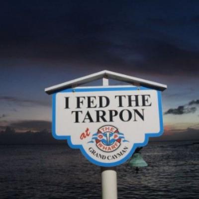 Tarpon Feeding